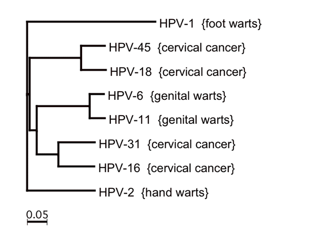 what-to-know-about-the-hpv-virus